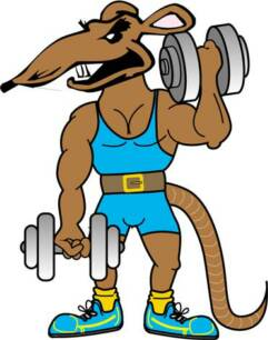 Image result for gym rats